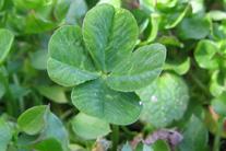 Irish Living with Healthier Hearts