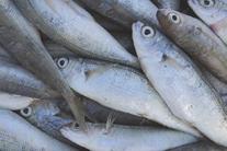 Concern Grows over Mercury in Tuna