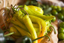 Harvard Pain Study Puts Chile Peppers in Limelight