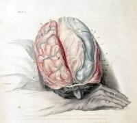 brainvein